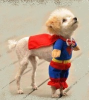 be you SUPERDOG